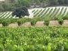 valladolid-provincia-vinedos-vega-sicilia